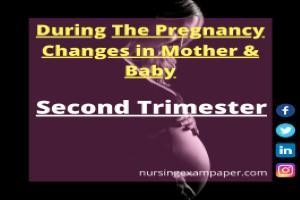 Second Trimester in the Pregnancy Period
