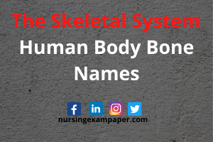 The Skeletal System Parts And Functions - Human Body Bone Names