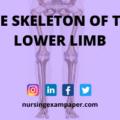 Bones of Lower Limb anatomy bones lower extremity bones