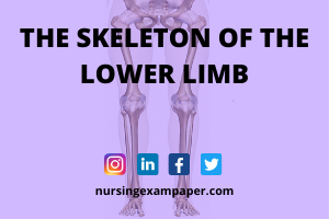 Bones of Lower Limb anatomy bones lower extremity bones