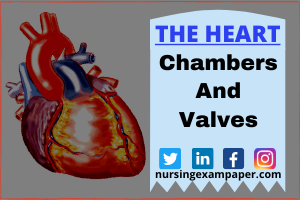 The heart consists of four chambers that are connected by valves
